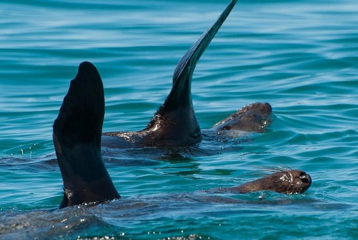 Sorrento Dolphin & Seal Cruise via WaterMaarq